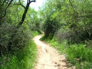 Photo of Hiking Trail at Camp Champions